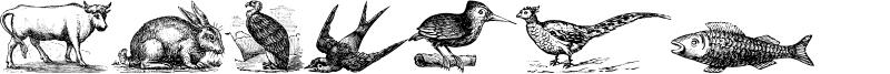 Animals Old Cuts Font