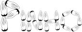 Pinho Font