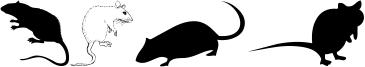 Rats Font